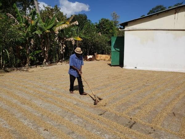 Caribbean Agribusinesses