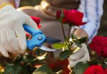 The Most Effective Way To Prune Your Flowers