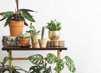 How To Make Your Home More Tropical